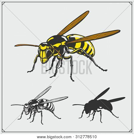 Set Of Wasp Illustration And Silhouette. Dangerous Stinging Insects Collection. Print Design For T-s