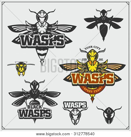 Set Of Wasp Labels, Badges, Icons And Design Elements. Dangerous Stinging Insects Collection. Sport
