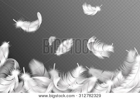 White Feathers Background. Falling Flying Fluffy Swan, Dove Or Angel Wings Feather, Soft Bird Plumag