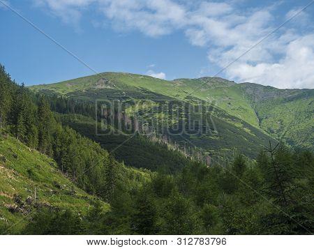 Beautiful Mountain Landscape With Lush Green Grass, Spruce Trees, Dwarf Scrub Pine And Bald Mountain