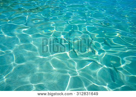 Ibiza Portinatx Arenal Petit beach clear water fishes in Balearic Islands