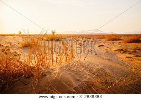 Vast area of desert covered with sand and dried out grass in beautiful morning light