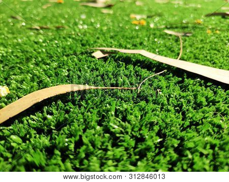 Fresh Green Grass With Leaves Background, Close View Macro Photo With Blurred Edges. Natural Backgro
