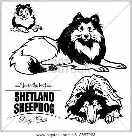 Shetland Sheepdog - Vector Set Isolated Illustration On White Background