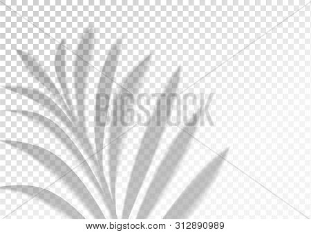 The Transparent Shadow Overlay Effect. Tropic Leaf. Mockup With Overlay A Palm Leaf Shadow. Natural