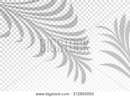 Two Transparent Vector Photo Free Trial Bigstock Pngtree provides you with 3,024 free leaf overlay hd background images, vectors, banners and wallpaper. two transparent vector photo free