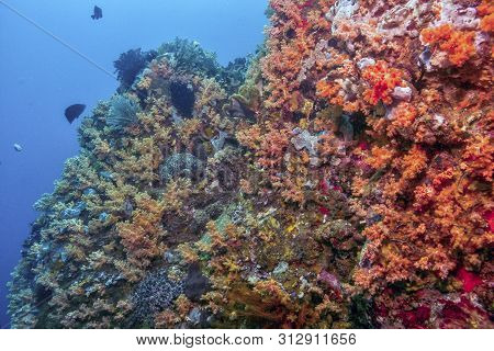 Lembah Strait In North Sulawesi Coral Reef With Crinoids And Soft Corals