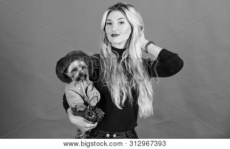 Girl Hug Little Dog In Coat. Woman Carry Yorkshire Terrier. Make Sure Dog Feel Comfortable In Clothe