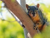 A very cute Image of a common squirrel poster