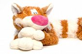 Big soft tabby goggleeyed red-haired cat - toy over white poster