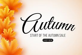 Autumn Sale. Web Banner With Lettering. Seasonal Poster With Autumn Leaves. Maple Leaf. Start Of The