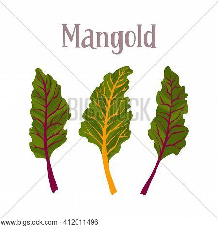 Healthy Nutrition Product. Fresh Tasty Mangold Salad.