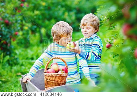 Two Adorable Happy Little Kids Boys Picking And Eating Red Apples On Organic Farm, Autumn Outdoors.