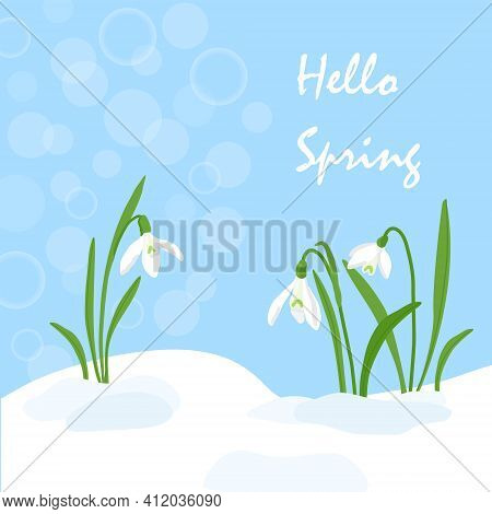 Handdrawn Snowdrops Flower In Melting Snow. First Growing Blooming Plants. Spring Landscape Template