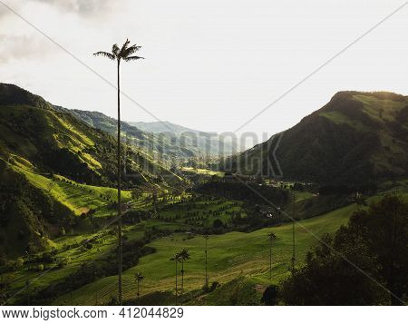 Aerial Outdoor Nature Landscape Panorama Of Tall Wax Palm Trees In Valle Del Cocora Valley In Salent