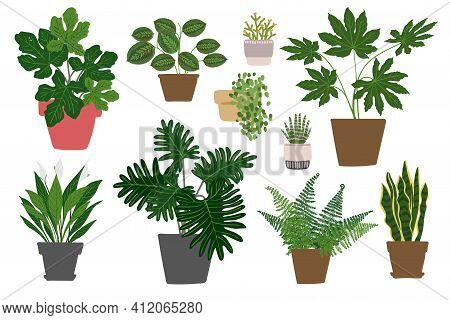 Indoor Plants And Flowers In Pots. Landscaping At Home. Decor For The Apartment And Garden. Cacti An