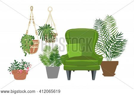 Home Plants And Flowers In Pots. Landscaping At Indoor. Decor For The Apartment And Garden. Cacti An