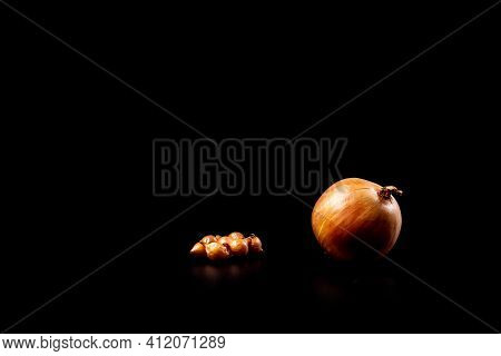 Growwing Onion From Bulbs, Onion Sets With Ready Big Onion Isolated On A Black With Copy Space.