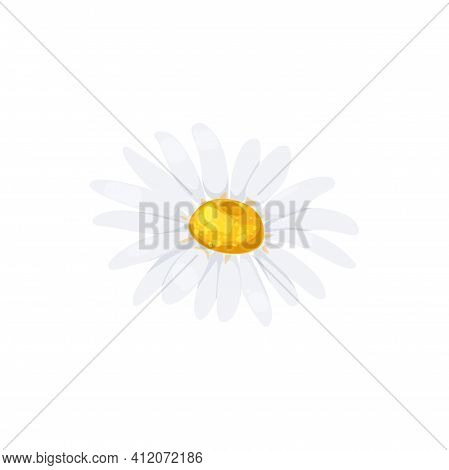 Chamomile Flower With White Petals And Yellow Middle Isolated Head Icon. Vector Daisy Or Camomile Bl
