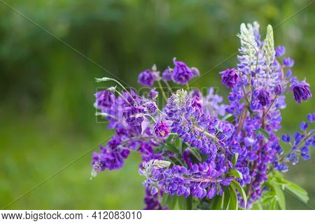 Bouquet Of Summer Flowers Outdoors. Large-leaved Or Bigleaf Lupine Purple Flowers. Lupinus Polyphyll