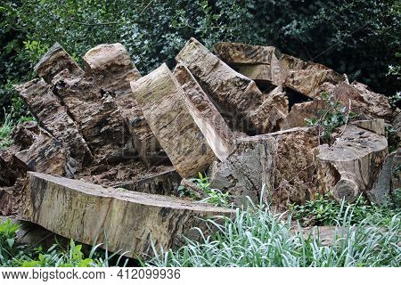 Stack Of Cut Tree Trunk Rings Left To Rot And Decay Naturally In A Pile For Wildlife With A Backgrou