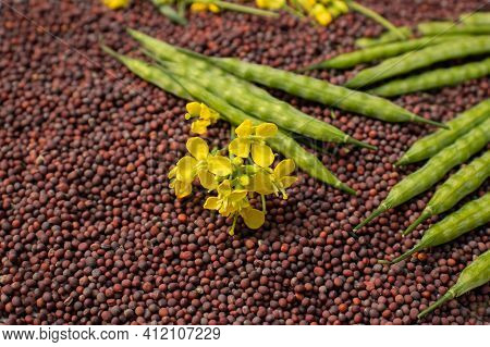 Closeup Of Mustard Flower And Pods On Black Mustard Seed Stack In Horizontal Orientation