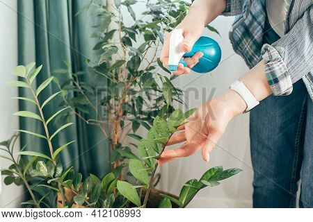 Woman Cleaning Leaves Of Potted Plants At Home. Bedroom Interior. Care Of Indoor Plants, Spring Clea