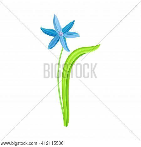 Blue Pendulous Flower Of Snowdrop Or Galanthus Bulbous Perennial Specie Vector Illustration