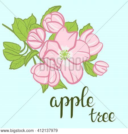 Blooming Apple Tree Branch, Sketch. Color Illustration, Freehand Drawing. Apple Tree Flowers With Le