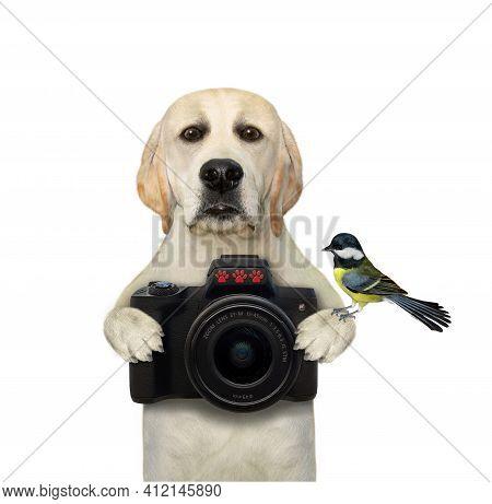 A Dog Labrador Photographer Holds A Black Photo Camera. White Background. Isolated.