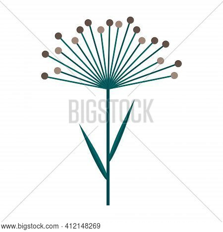 Umbrella Of Dill Or Cereal Plant. Simple Minimalistic Green Branch With Leaves And Brown Flowers. Na