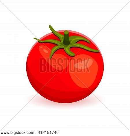 Red Ripe Tomato With A Tail Isolated On A White Background. Wind Illustration Of Juicy Ripe Tomato.