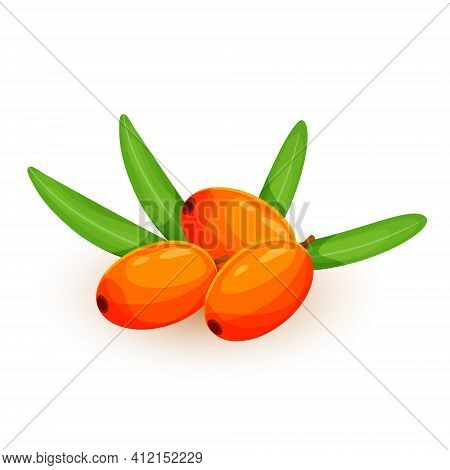 Sea Buckthorn Isolated On The White. Vector Illustration In 3d Style. The Concept Of Realistic Image