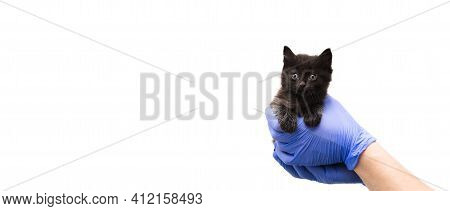 Checkup And Treatment Of Black Small Kitten At A Veterinarian Visit In The Veterinary Clinic. Cat In
