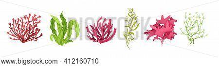 Underwater Marine Flora Set. Marine Aquarium Flora, Aqua Plants, Coral Reef Underwater Seaweed Ocean