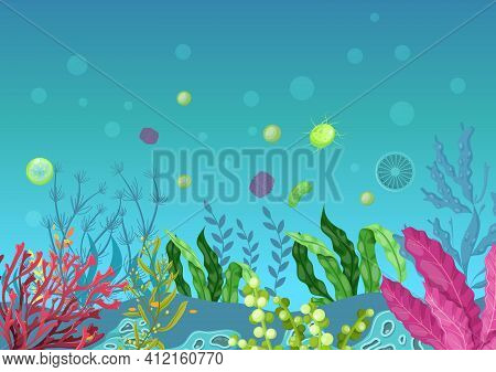 Sea Underwater Marine Background. Marine Sea Bottom With Aqua Plants, Coral Reef Underwater Seaweed