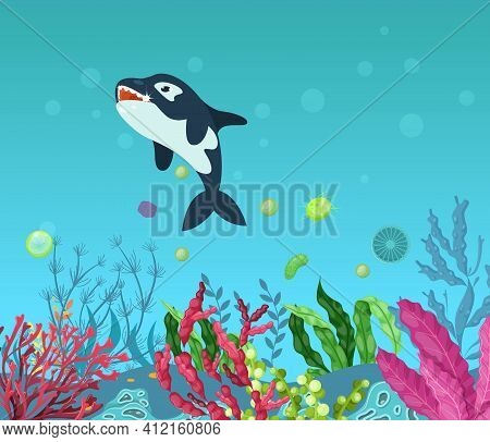 Sea Underwater Marine Background With Killer Whale . Marine Sea Bottom With Aqua Plants, Coral Reef