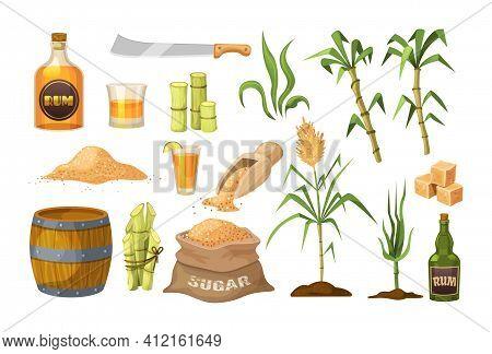 Fresh Cane Sugar With Stem And Leaf Plants Set. Sugarcane Plants, Cane Sugar Lumps And Cube, Glass B