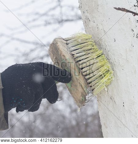Apply A Brush Of Whitewash To The Trees In The Garden To Protect Them From The Sun.