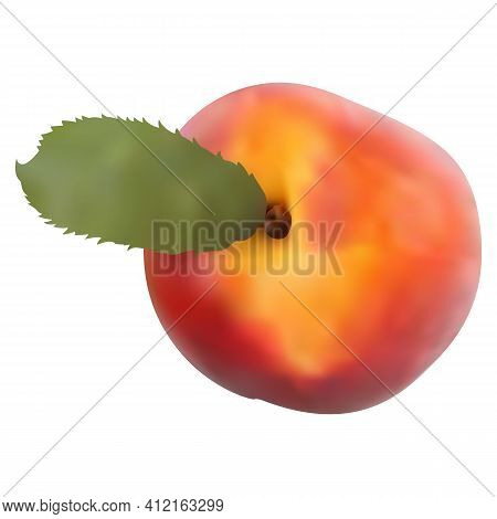 Peach Fruit Isolated On White Background. Peach Icon. 3d Gradient. Vector