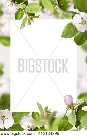Beautiful Natural Spring Background. Blooming Branches Spring Flowers Green Leaves Blank White Sheet