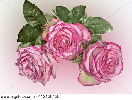 Three Pale Pink Rose Flowers With Leaves On Blurred Pastel Background. Festive Floral Design. Bouque