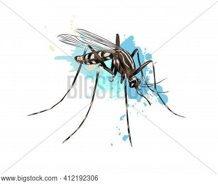 Mosquito From A Splash Of Watercolor, Colored Drawing, Realistic