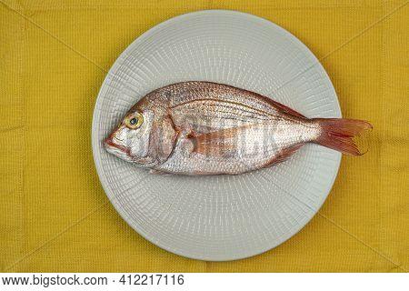 The Red Snapper Fish (dentex Dentex) In The Dish