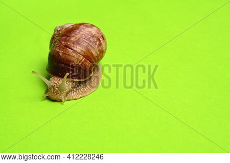 Snail on green background with copy space