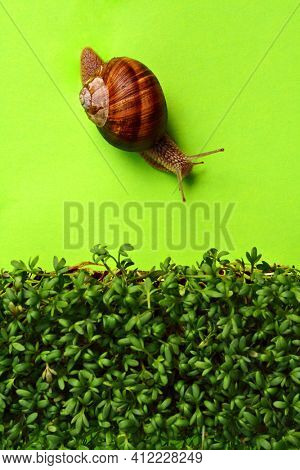 snail on bright green surface heading towards bed of cress