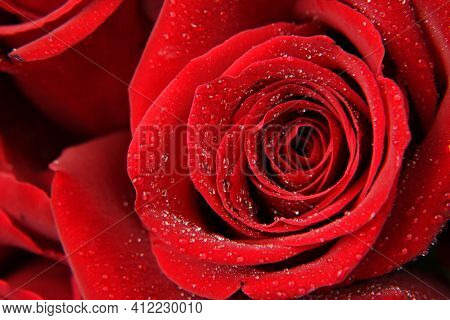 close-up of a red rose with drops