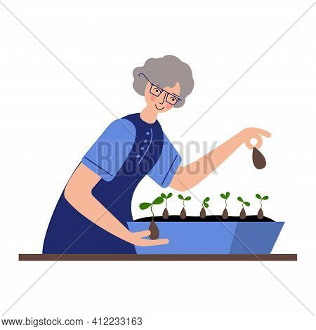 The Happy Seniors Is Planting Seeds For Seedlings. Home Garden. The Seeds Sprouted At Home.