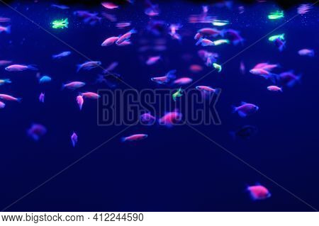 Neon Glow Fish Color Freshwater Aquarium. Underwater In The Neon Light. The Screen Is Dark Aquarium.