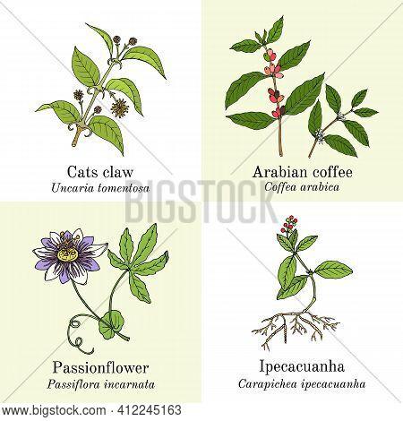 Set Of Amazonian Edible And Medicinal Plants. Hand Drawn Botanical Vector Illustration